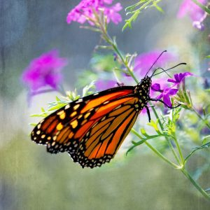 Monarch Whimsy