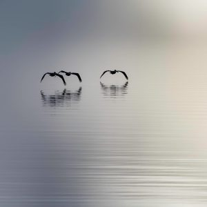 Four Birds – One Pole