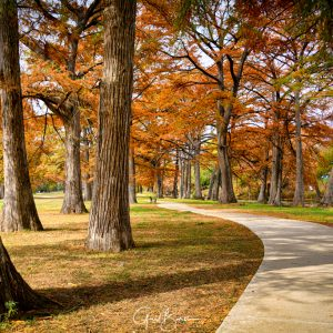 Down the Cypress Path